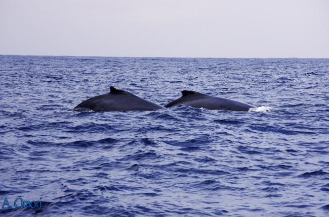 whales2s.jpg
